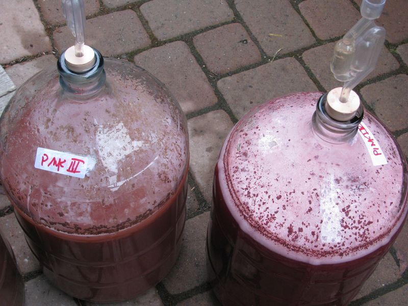 Pink Gross Fermentation