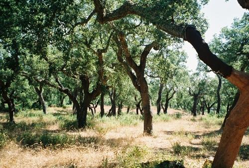 Blind Muscat S Cellarbook Berkeley Boy Hugs Naked Cork Tree